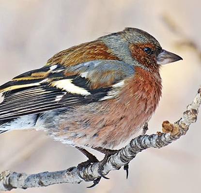 Фотовыставка Армана Туманяна «Птицы Нансен-парка»