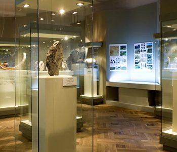 Постоянная экспозиция «Каменный век 1 800 000 лет назад – 4000 гг. До н.э»